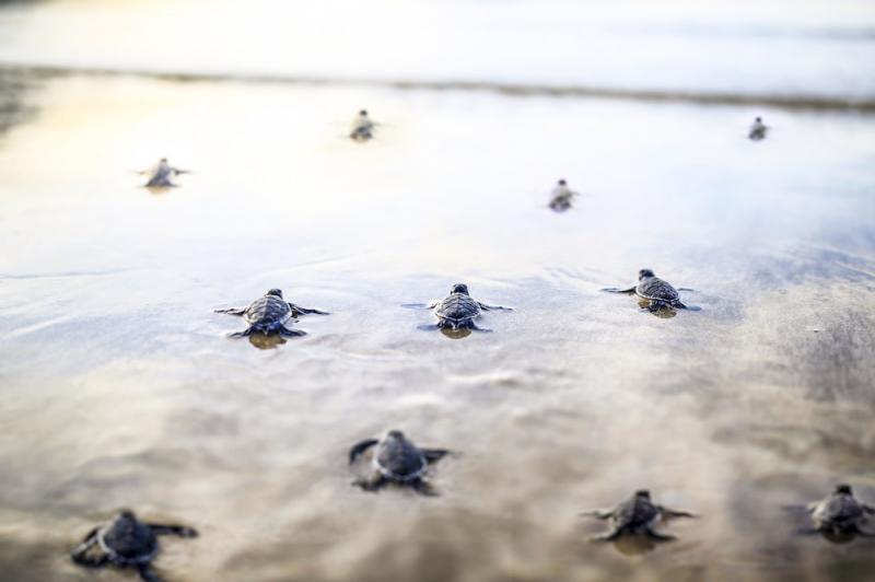 Six Senses Côn Đảo được công nhận vì nỗ lực bảo tồn rùa xanh có nguy cơ tuyệt chủng và giảm thiểu 99% rác thải nhựa,