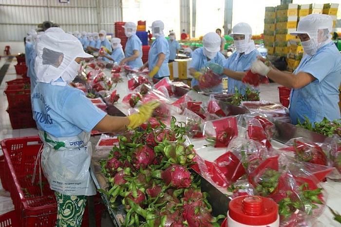 Thanh long ruột đỏ là 1 trong hơn 100 gian hàng nông sản của tỉnh Vĩnh Phúc trên sàn thương mại điện tử voso.vn. Ảnh: TL.